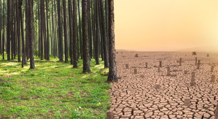 Green Forest and Dry cracked earth with death tree metaphor Climate change, Environment disaster by human concept.
