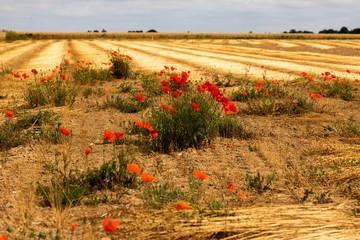 Leinacker in der Normandie in Frankreich