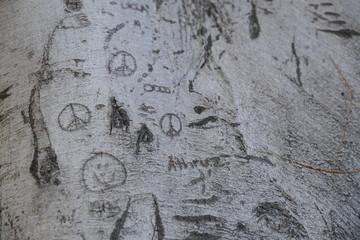 Foto op Plexiglas Graffiti Wood texture for design