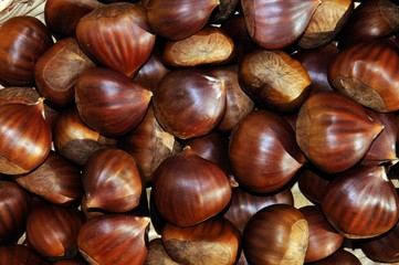 Chestnuts collected from the Serrania de Ronda, Andalusia, Spain.