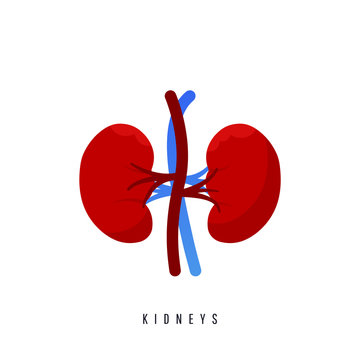 World kidney day card, vector illustration with cute cartoon couple of kidneys