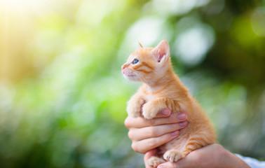 Man holding cat. Baby kitten in human hands.