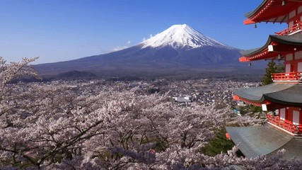 Wall Mural - Panning shot of Mt. Fuji with Chureito Pagoda in Spring, Fujiyoshida, Japan