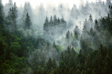Photo sur Aluminium Arbre Misty mountain landscape