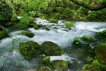 Printed kitchen splashbacks River 《新緑の奥入瀬渓流》青森県十和田市