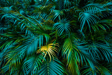 Tropical palm leaf branches for floral pattern background, Green leaves of tropical forest plant for nature pattern and background, Summer and Spring concept, design with copy space for text. Wall mural