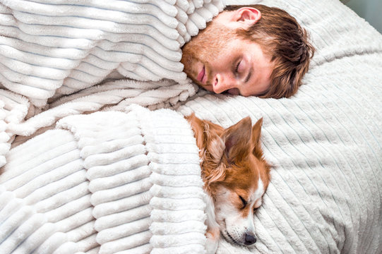 red dog sleeps with his owner in the bed. Concept weekend and rest
