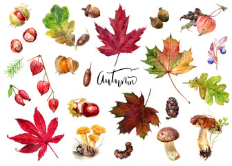 Autumn foliage elements watercolor isolated on white background