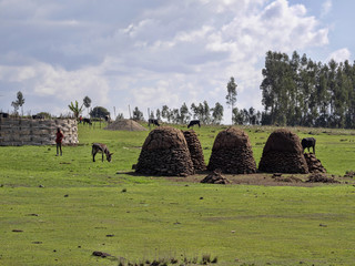 Cattle droppings are a valuable raw material for heating, Ethiopia