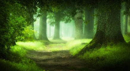 Photo sur Plexiglas Route dans la forêt magic forest
