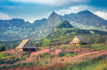 mountain landscape, Tatra mountains panorama, Poland colorful flowers and cottages in Gasienicowa valley (Hala Gasienicowa), summer Fototapete