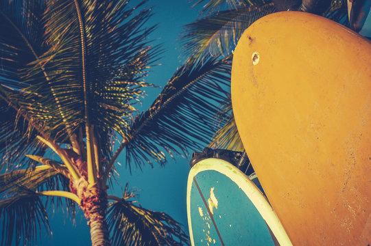 Vintage Surfboards And Palms