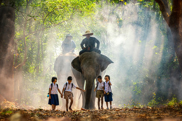 Mahout and student little asian in uniform are raising elephants on walkway in forest. Student little asian girl and boy singsong with him elephant, Tha Tum District, Surin, Thailand.