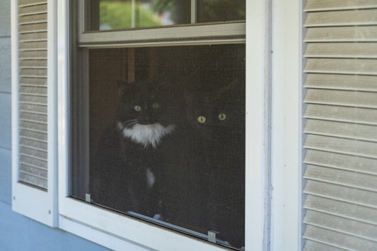 Two cats, one all black and one black and white tuxedo colored, sitting in a window looking out through the screen