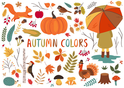 set of isolated autumn colorful elements  - vector illustration, eps