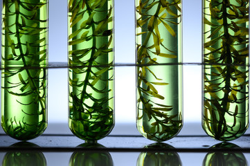 algae seaweed research, biofuel  industry science, sustainable concept