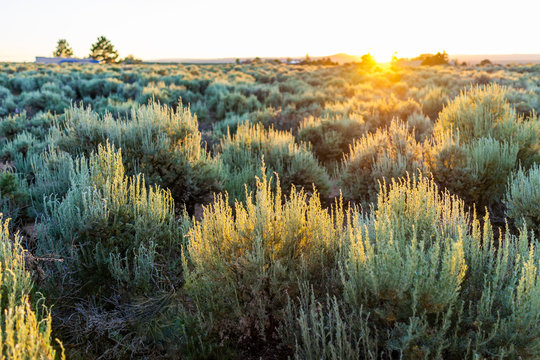 View of sunset sun through grass green desert sage brush plants in Ranchos de Taos valley and green landscape in summer with sunlight