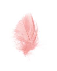 Beautiful soft pink feather flamingo isolated on white background