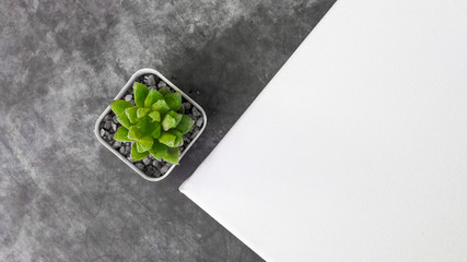 top view cactus and a blank canvas for a mockup template.