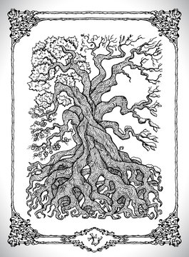 Symbol of four calendar year seasons and old tree. Vector line art mystic illustration. Engraved drawing in gothic style. Occult, esoteric and fantasy concept.