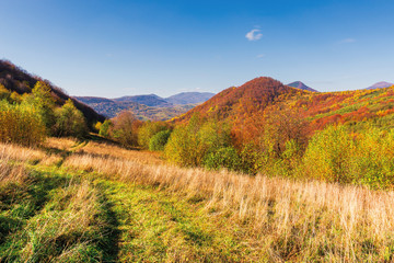 beautiful mountain landscape in autumn. forest on the grassy hills. wonderful sunny weather at high noon. amazing carpathian scenery of uzhanian national park, ukraine
