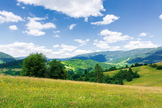 beautiful mountain landscape in summer. grassy meadow with wild herbs on rolling hills. ridge in the distance. amazing sunny weather with fluffy clouds on the blue sky