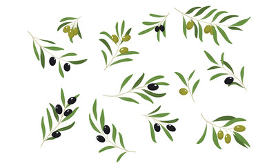 Olive Tree Branches Set, Eco Healthy Organic Products or Cosmetics Design Element Vector Illustration Fotoväggar