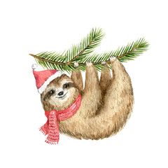 Watercolor vector Christmas card cute Sloth hanging on a fir branch.