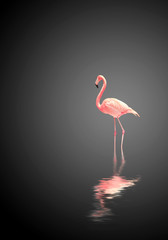 Aluminium Prints Flamingo Flamingo on black background