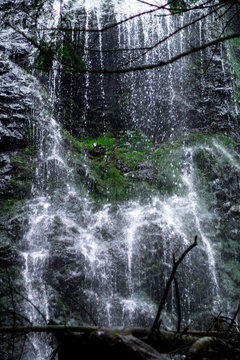 high waterfall in dark forest dark green plants around, logs below of waterfall