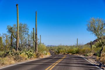Highway through Saguaro National Park, Arizona