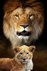 Foto op Canvas Leeuw Male lion and cub portrait on savanna landscape background