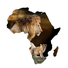 Wall Mural - Male lion and cub portrait in Africa map on white
