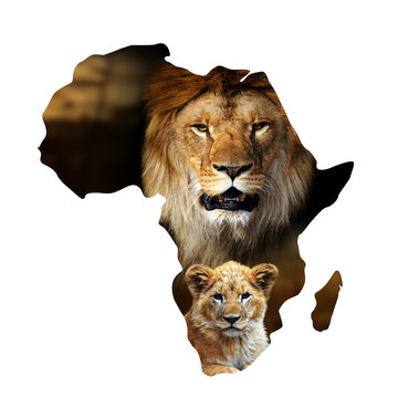 Male lion and cub portrait in Africa map on white