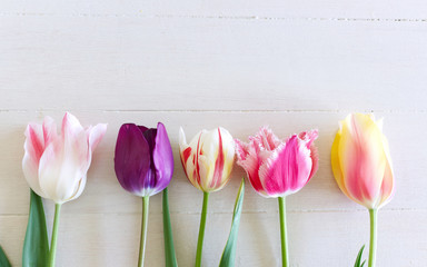 Styled stock photo. Spring feminine scene, floral composition Beautiful tulips on white background. Flat lay, top view.Empty space for your text.