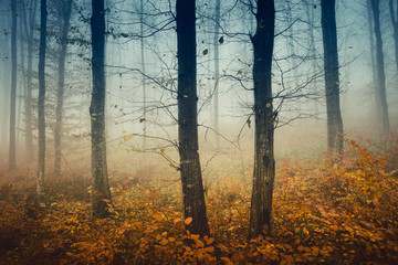mysterious autumn woods, trees with bare branches and colorful fallen leaves in forest landscape
