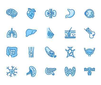 Organs, anatomy flat line icons set. Human bones, stomach, brain, heart, bladder, nervous system vector illustrations. Outline pictograms for medical clinic. Pixel perfect 64x64. Editable Strokes