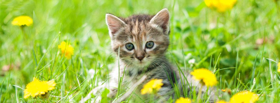 Cute kitten in green grass - banner - web header template - website simple design