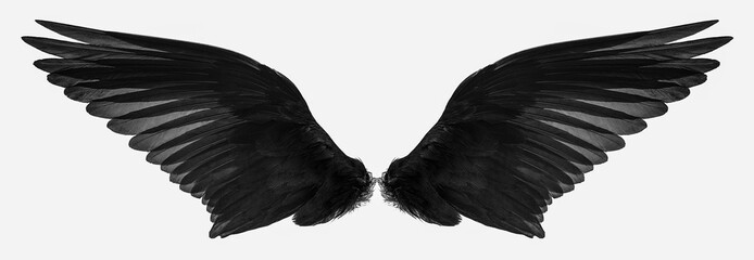 bird wings isolated on a white background Fotobehang