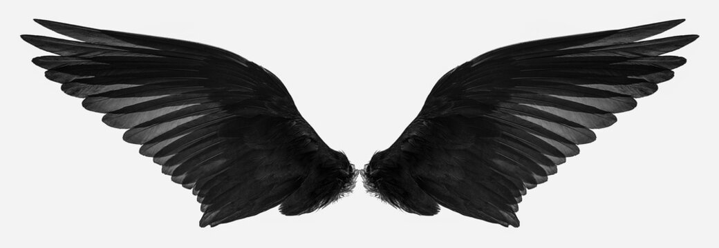 bird wings isolated on a white background