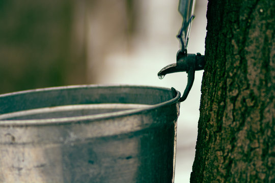 Maple syrup tap  process