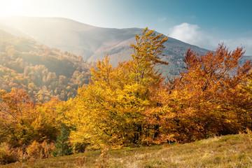 Beautiful landscape with autumn trees in Carpathian mountains, Ukraine