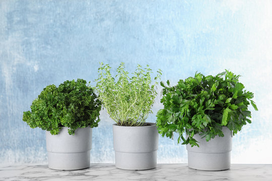Seedlings of different aromatic herbs on marble table at blue wall