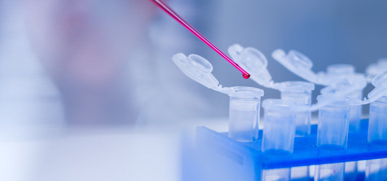 Laboratory of food quality.Cell culture assay to test genetically modified seed.