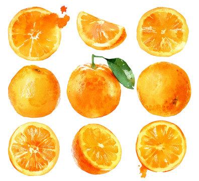Watercolor painting oranges