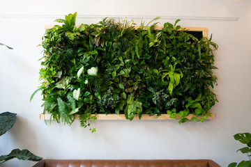 Acrylic Prints Plant Floating plants on wall over brown leather couch, vertical garden indoors