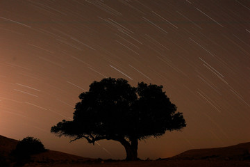 A long exposure shows stars behind a tree during the annual Perseid meteor shower near the town of Mitzpe Ramon, southern Israel