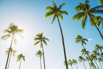 Foto op Plexiglas Palm boom Hawaii tall palm trees with sun flare against blue sky summer travel background USA vacation destination.