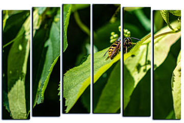 modular picture on white background, wasp on green leaves, wildlife.