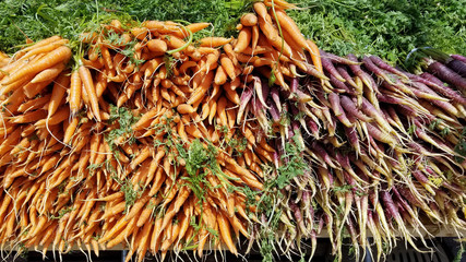 Big pile of fresh organic carrots at a summer farmers market in New York City